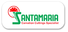 Santamaria Carnation Plant in Pune
